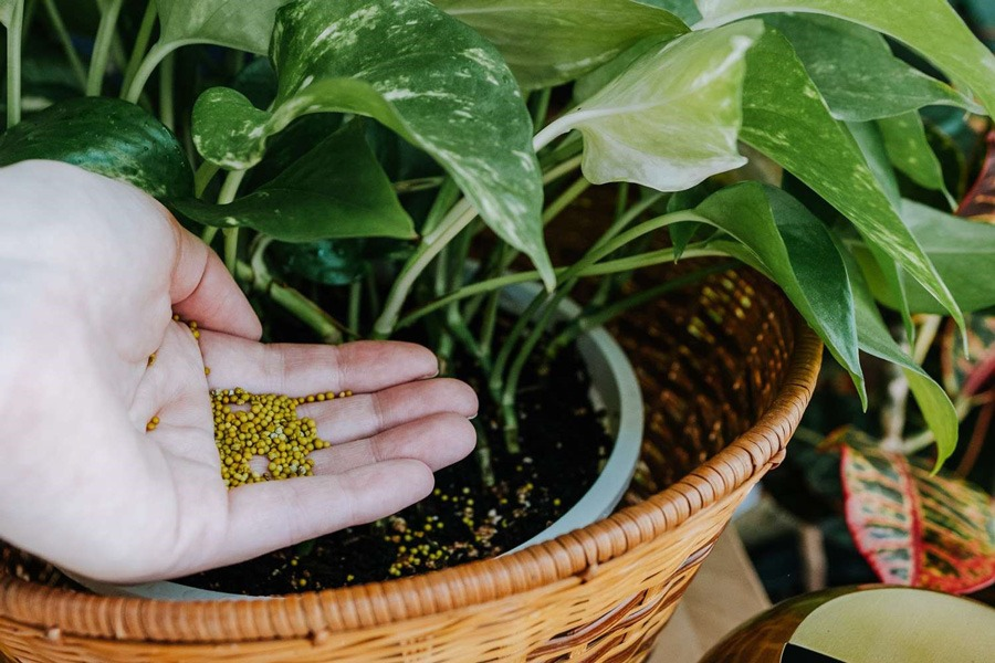 تقویت گیاهان آپارتمانی