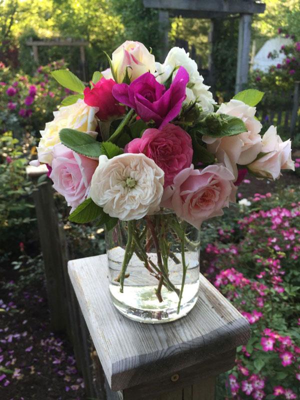 جلوگیری از پژمرده شدن گل رز