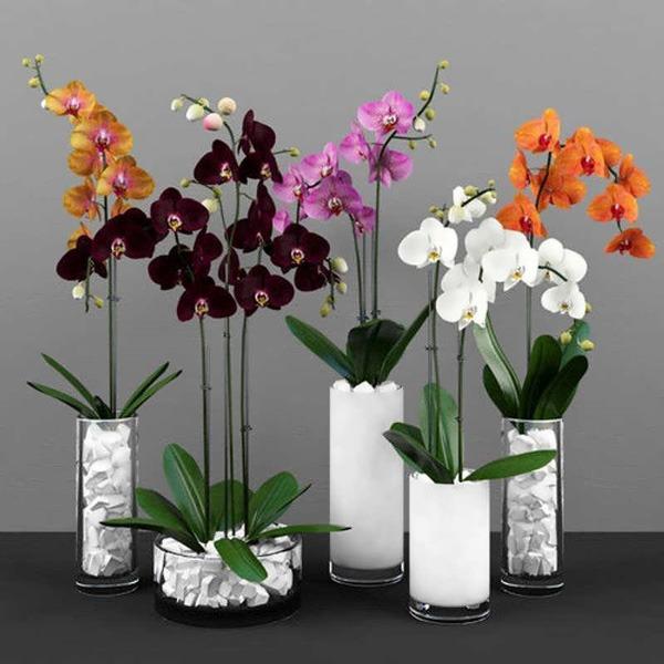 عوض کردن خاک گلدان