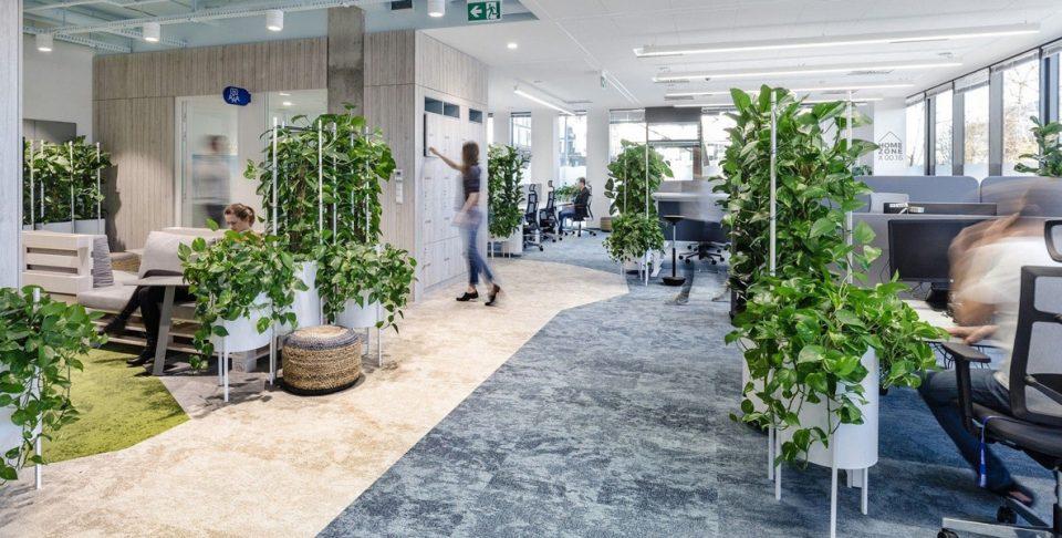 گیاهان مناسب محل کار