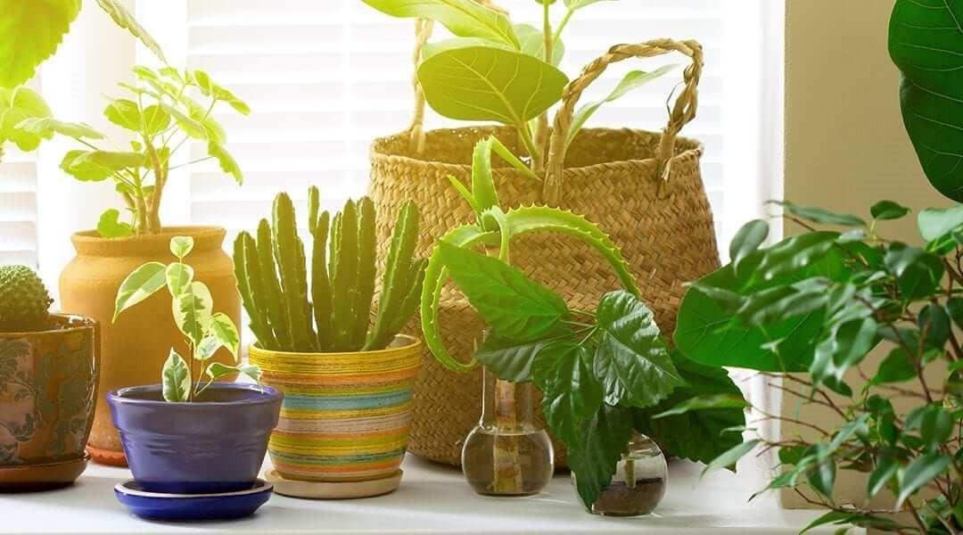 میزان نور لازم برای گیاهان آپارتمانی در زمستان و تابستان
