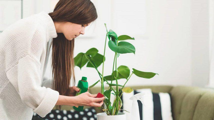 کود سه بیست برای گلهای آپارتمانی