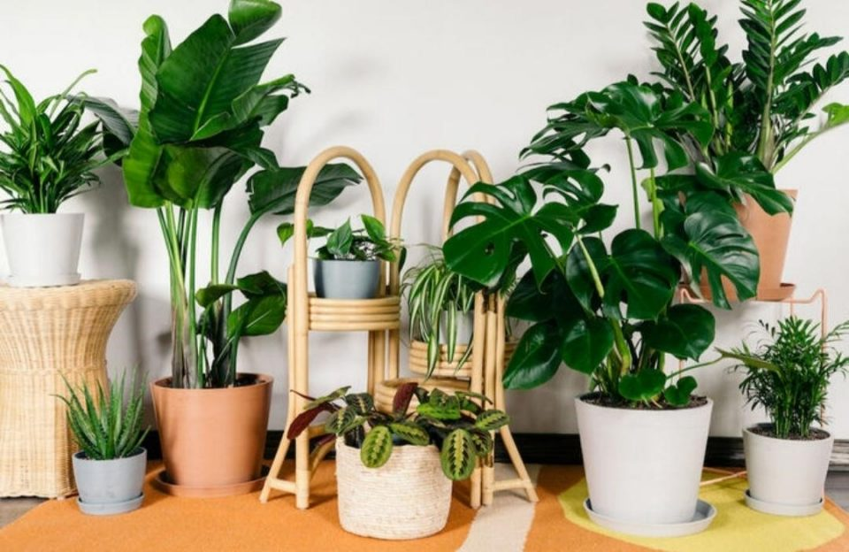 بهترین زمان تکثیر و قلمه زدن گیاهان آپارتمانی