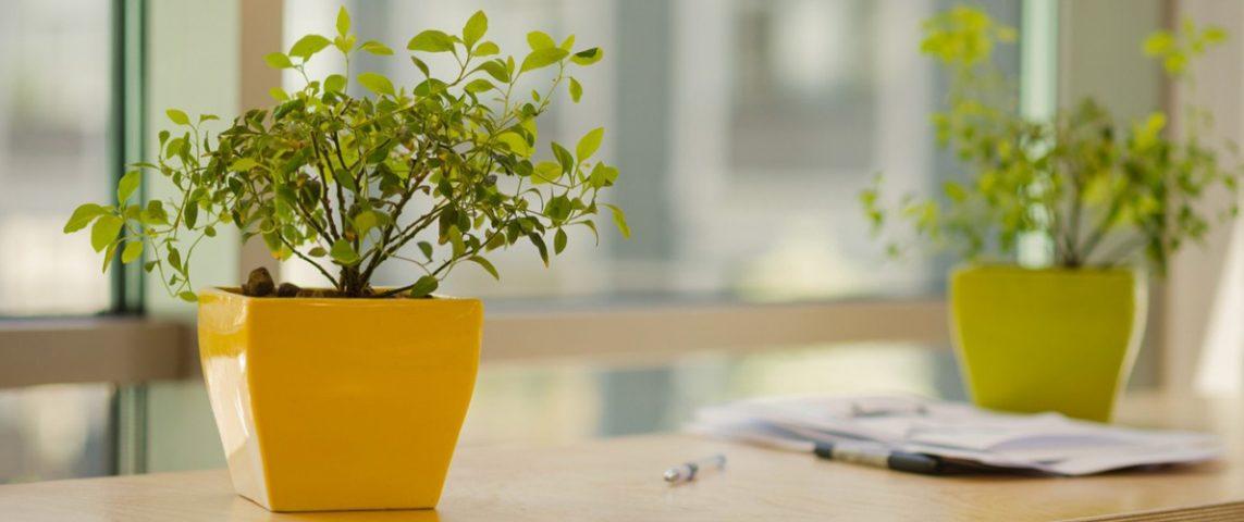 شرایط نگهداری و میزان نور لازم برای گیاهان آپارتمانی در زمستان و تابستان