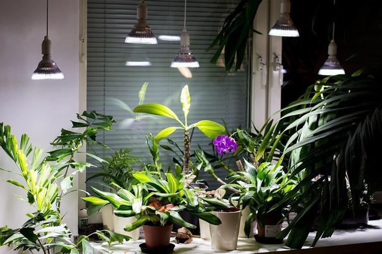 میزان نور لازم برای گیاهان آپارتمانی در زمستان و تابستان برای نگهداری در گلخانه