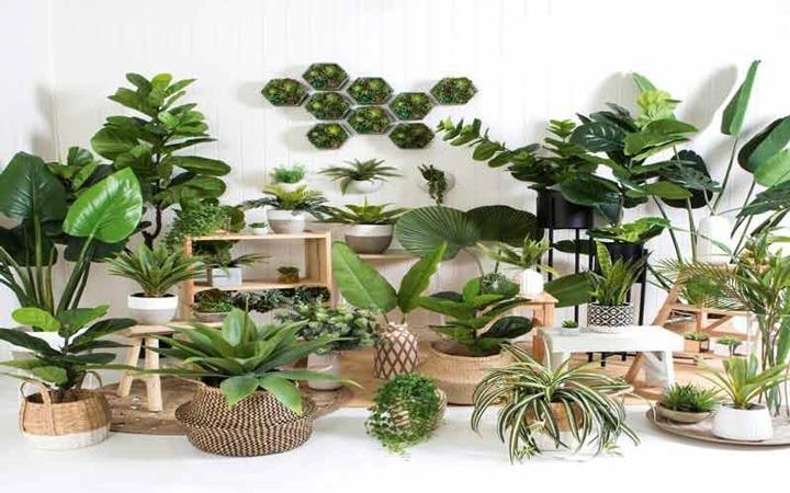گیاهان آپارتمانی سایه دوست مقاوم به سرما | گیاهان آپارتمانی مقاوم به سرما