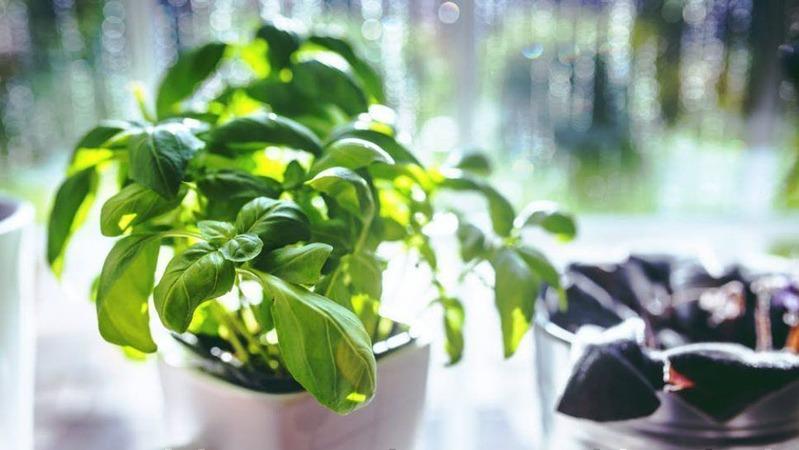 گیاهان دفع کننده انرژی منفی